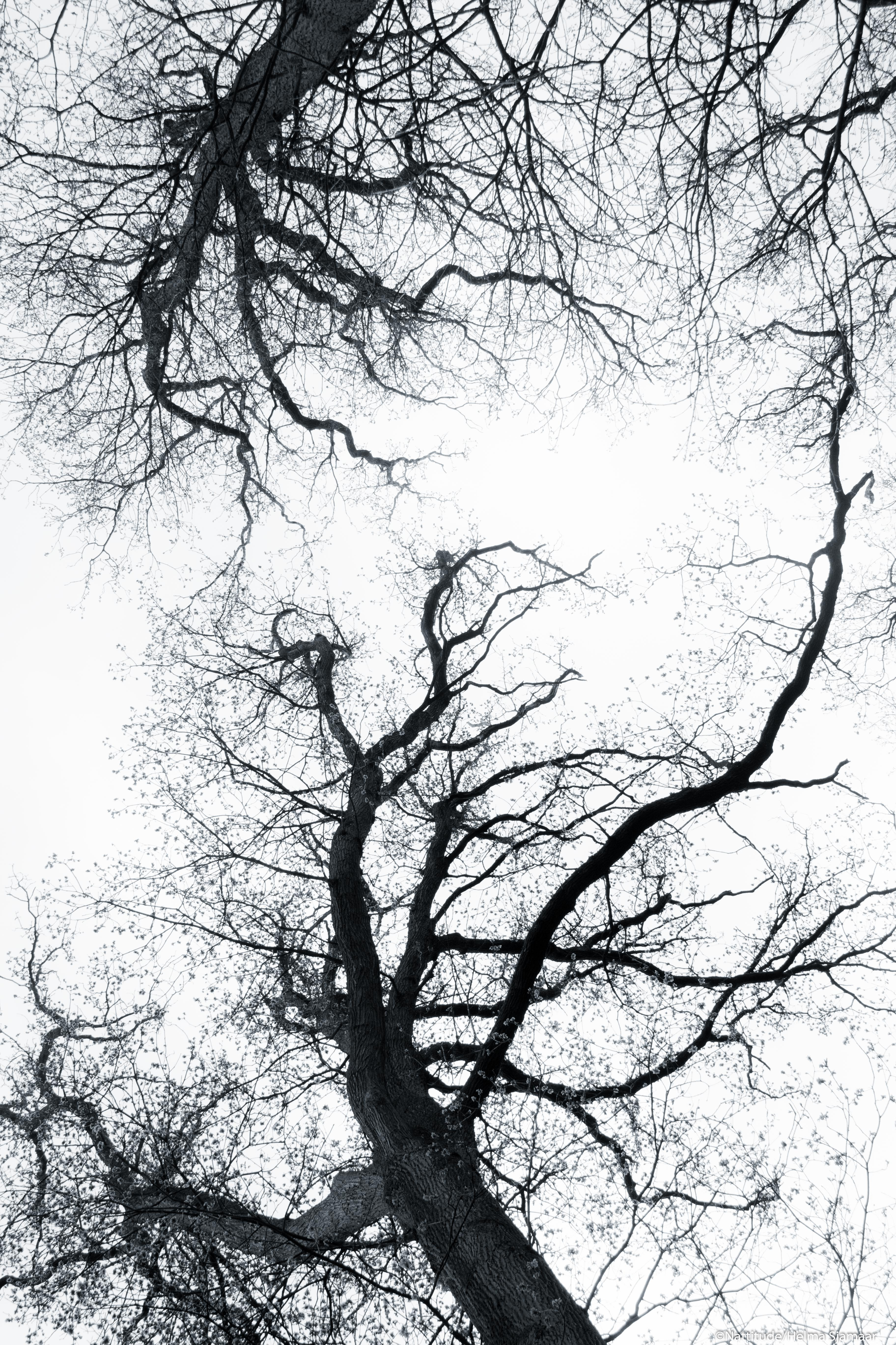 Bomen 02