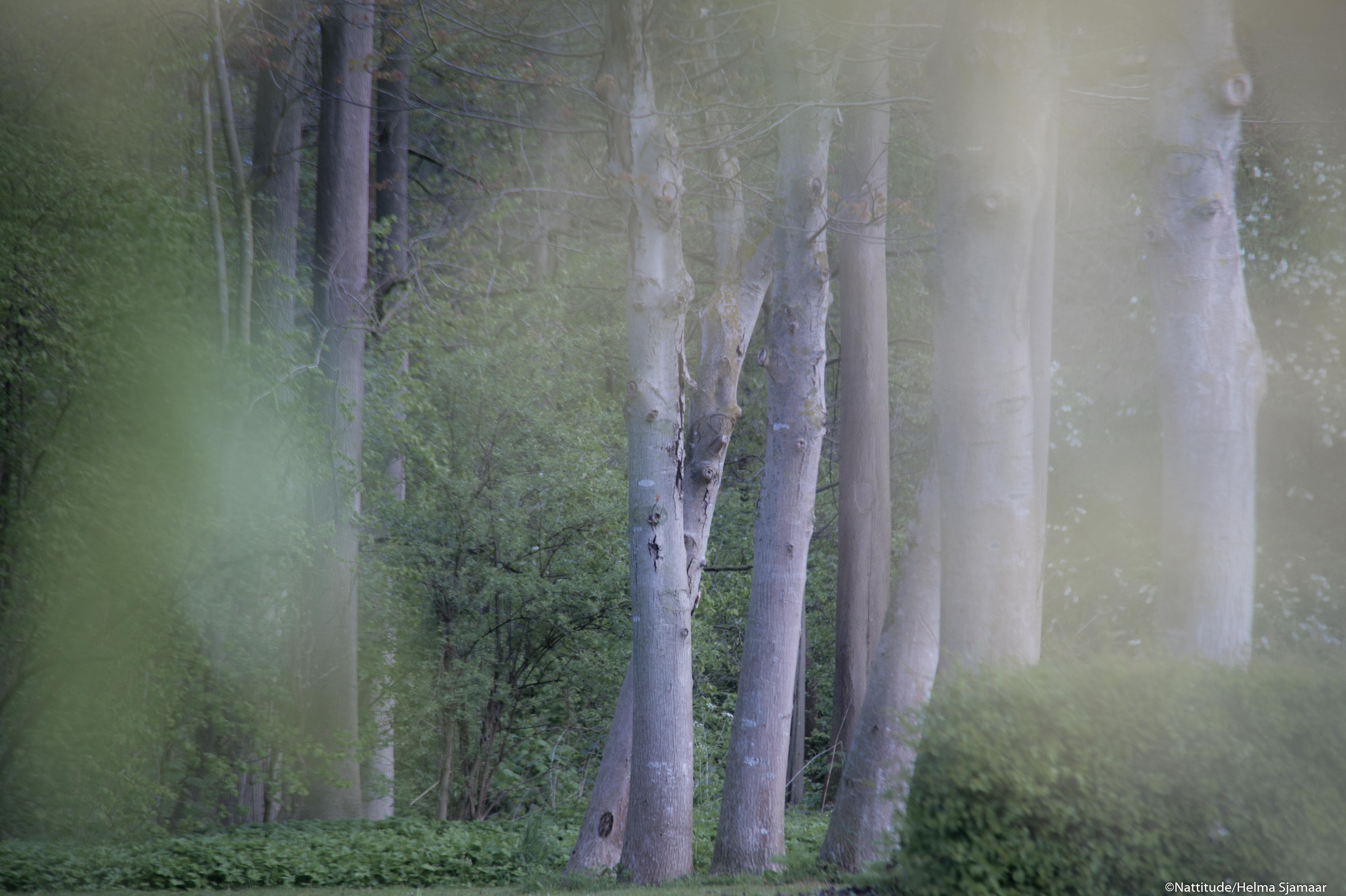 Bomen 09