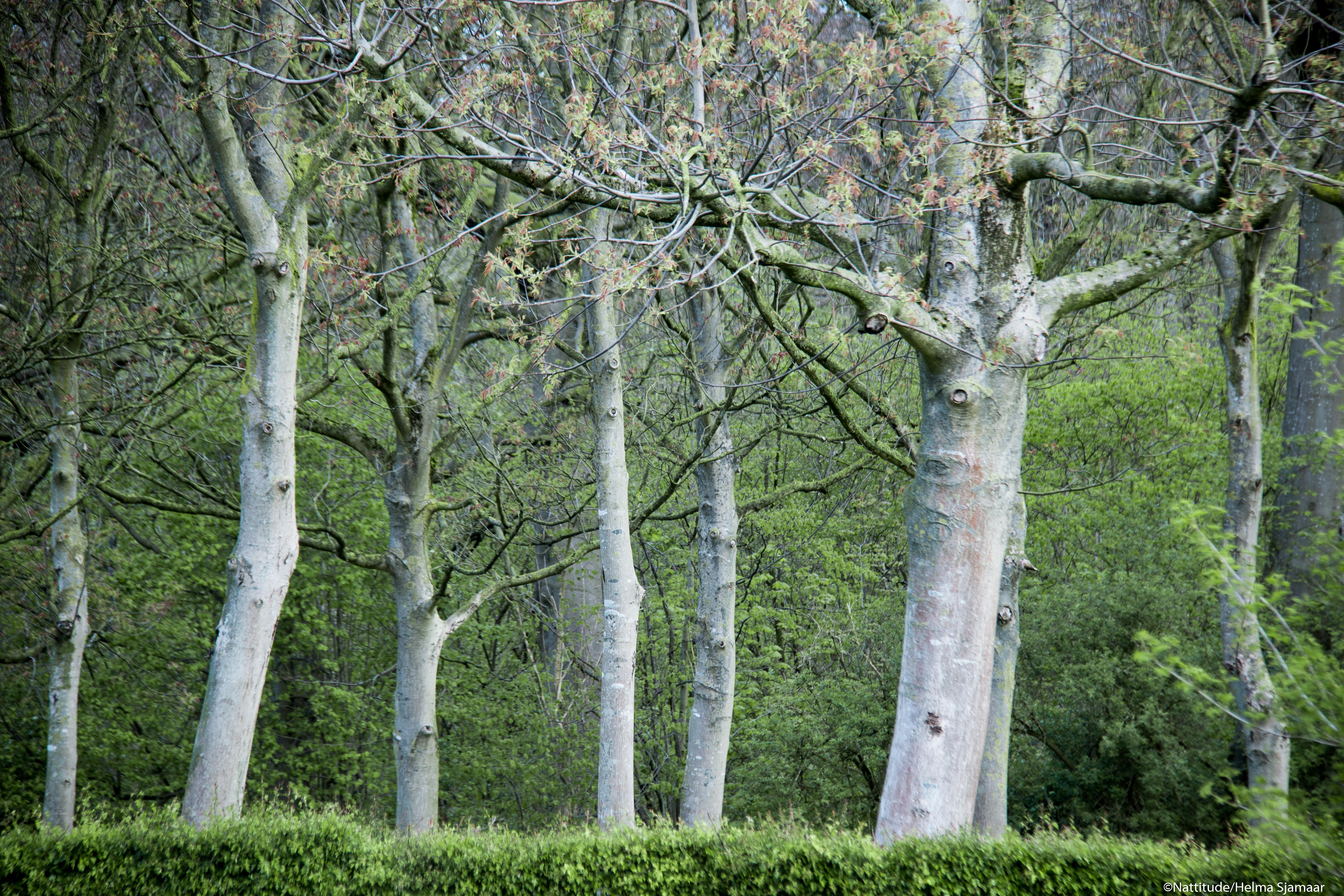 Bomen 10