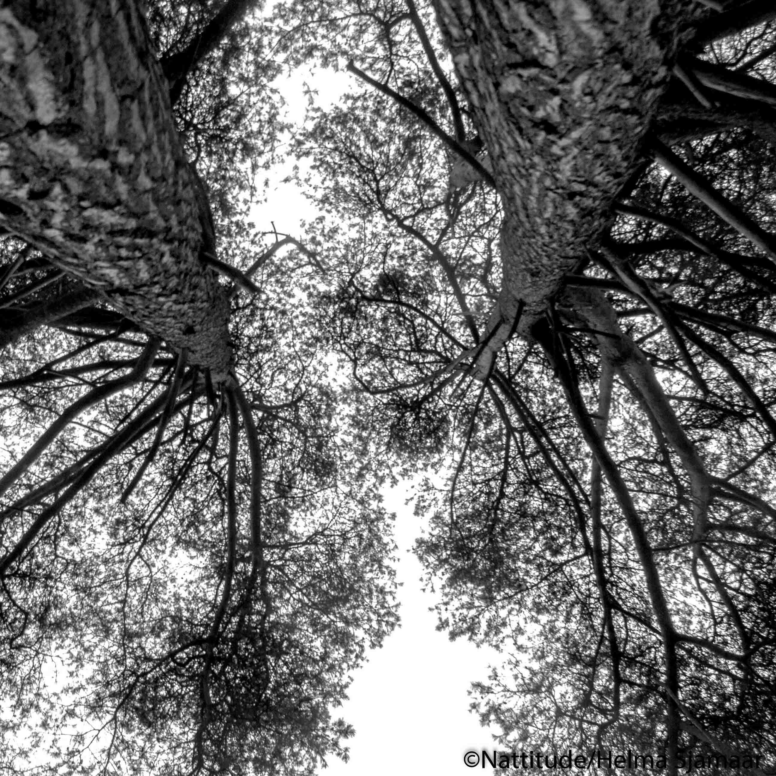 Bomen 01.jpg