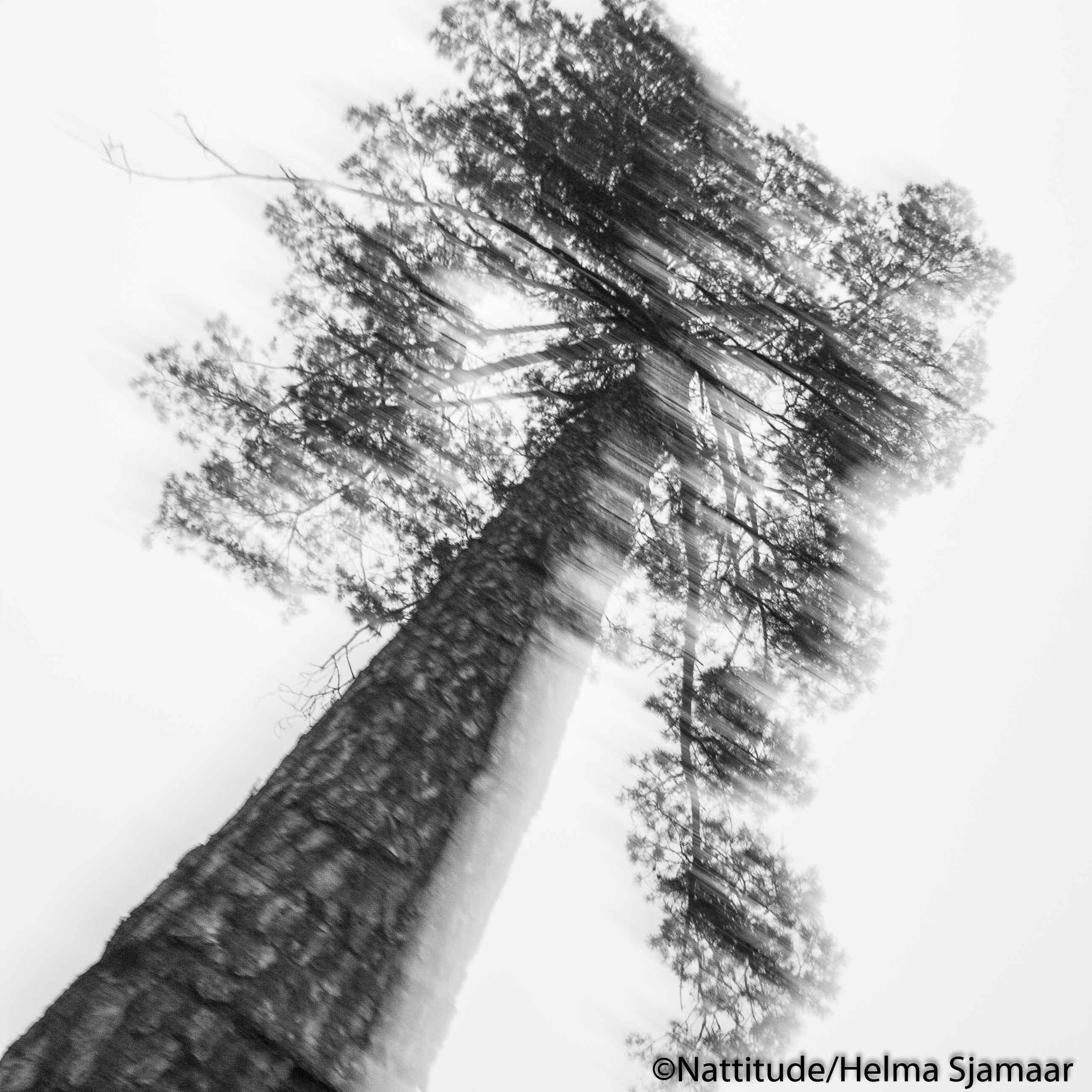 Bomen 04.jpg