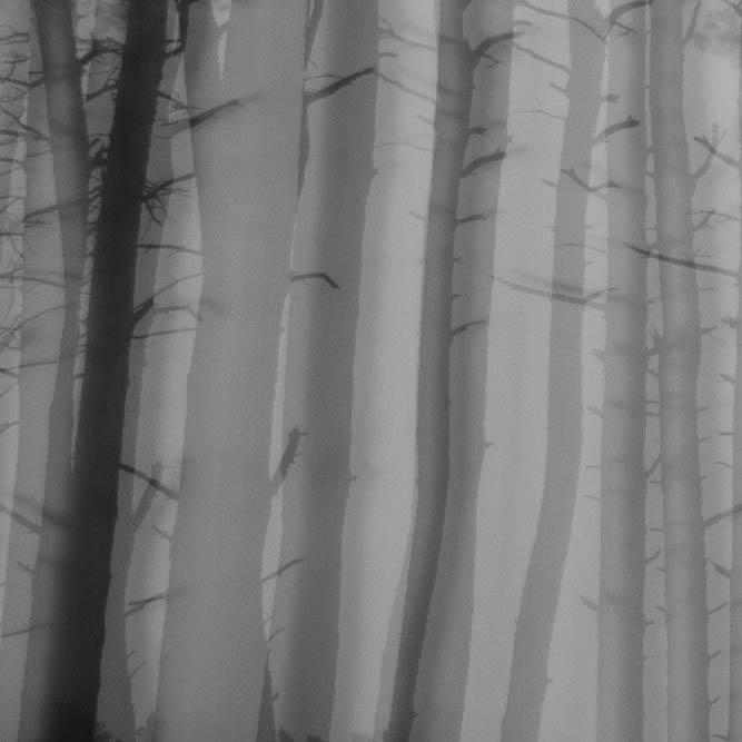 Bomen 09.jpg