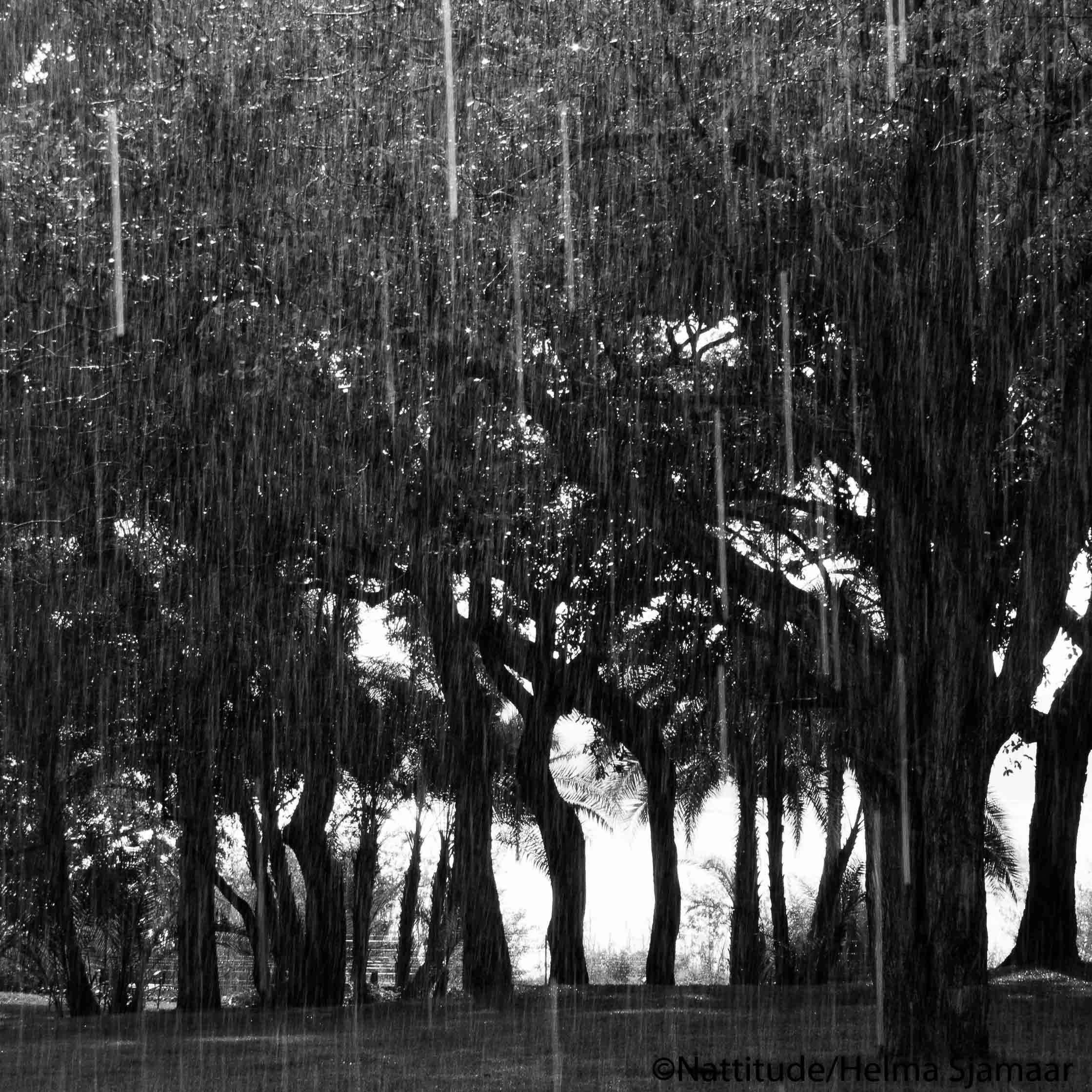 Bomen 11.jpg