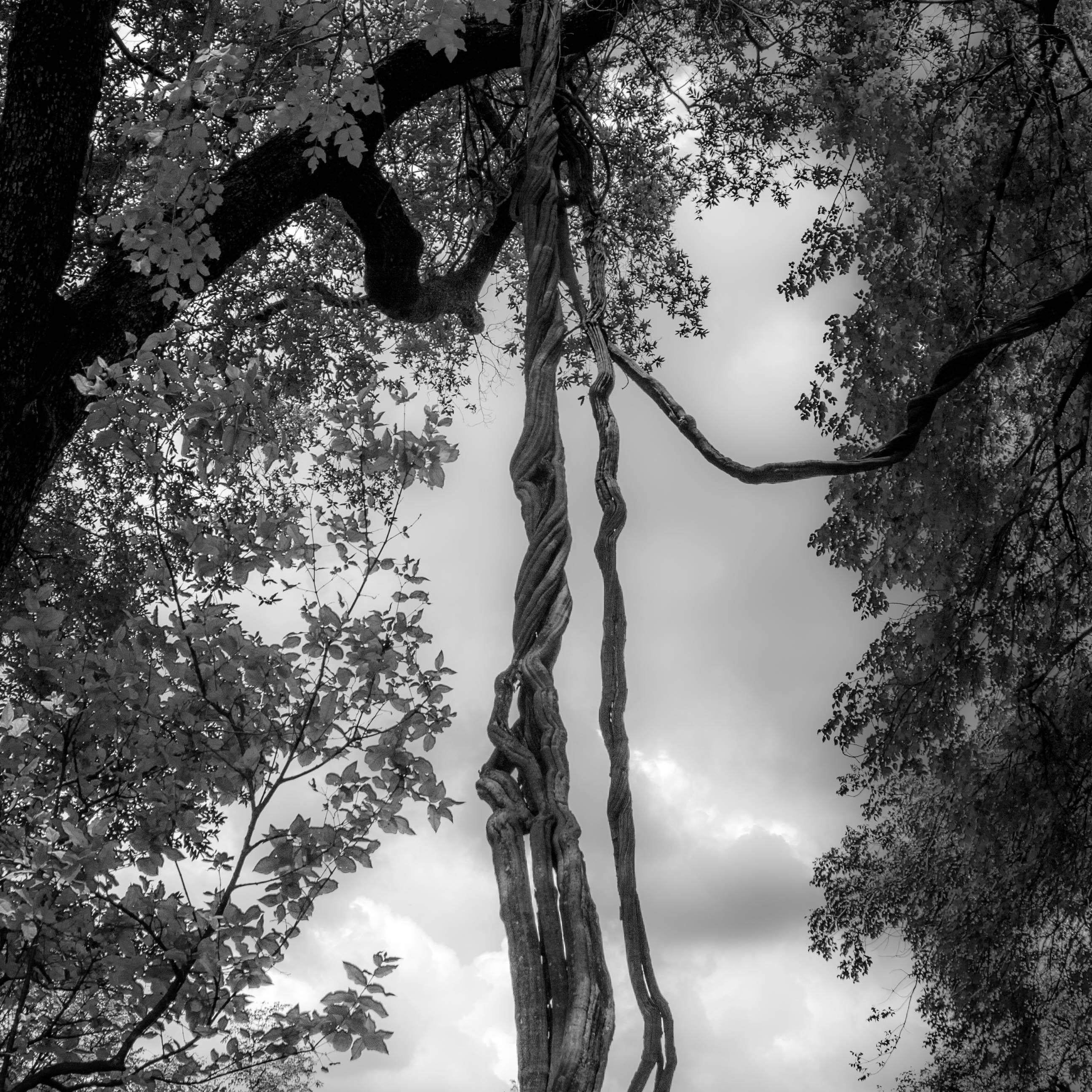 Bomen 13.jpg