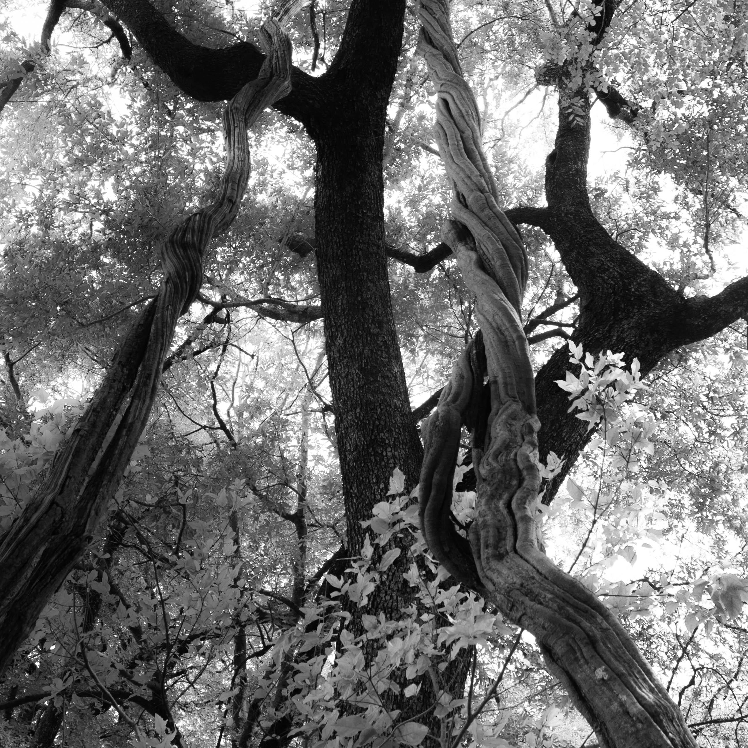 Bomen 14.jpg