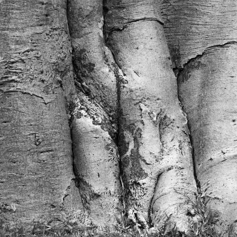 Bomen 17.jpg