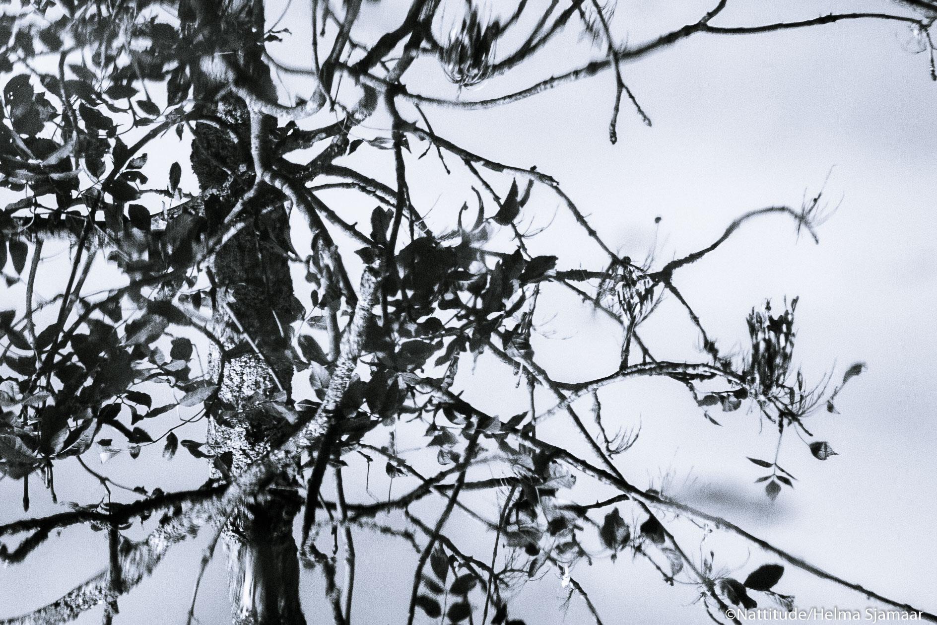 Bomen weerspiegeling 2