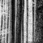 Bomen 06.jpg