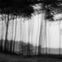 Bomen 07.jpg