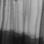 Bomen 10.jpg
