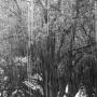 Bomen 12.jpg