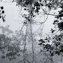 Bomen weerspiegeling 4