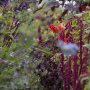 20191026-Giverny-herfst-12
