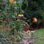 20191026-Giverny-herfst-13