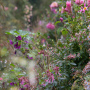 20191026-Giverny-herfst-15