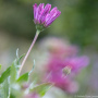 20191026-Giverny-herfst-17