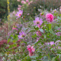 20191026-Giverny-herfst-18