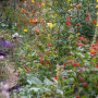 20191026-Giverny-herfst-22