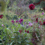 20191026-Giverny-herfst-6