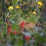 20191026-Giverny-herfst-8