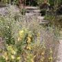 2017 Herbarium jul (11 van 19)