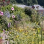 2017 Herbarium jul (14 van 19)