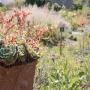 2017 Herbarium jul (15 van 19)