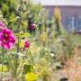 2017 Herbarium jul (18 van 19)