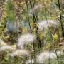 2017 Herbarium jul (2 van 19)