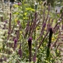 2017 Herbarium jul (4 van 19)