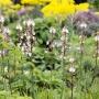 2017 Herbarium (21)