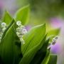 2017 Herbarium (55)
