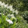 20170815 Jardin Francois 0001-2224
