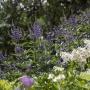 20170815 Jardin Francois 0001-2252