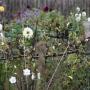 2019-10-Jardin-Plume-40