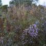2019-10-Jardin-Plume-8