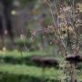 2019-10-Jardin-Plume-13