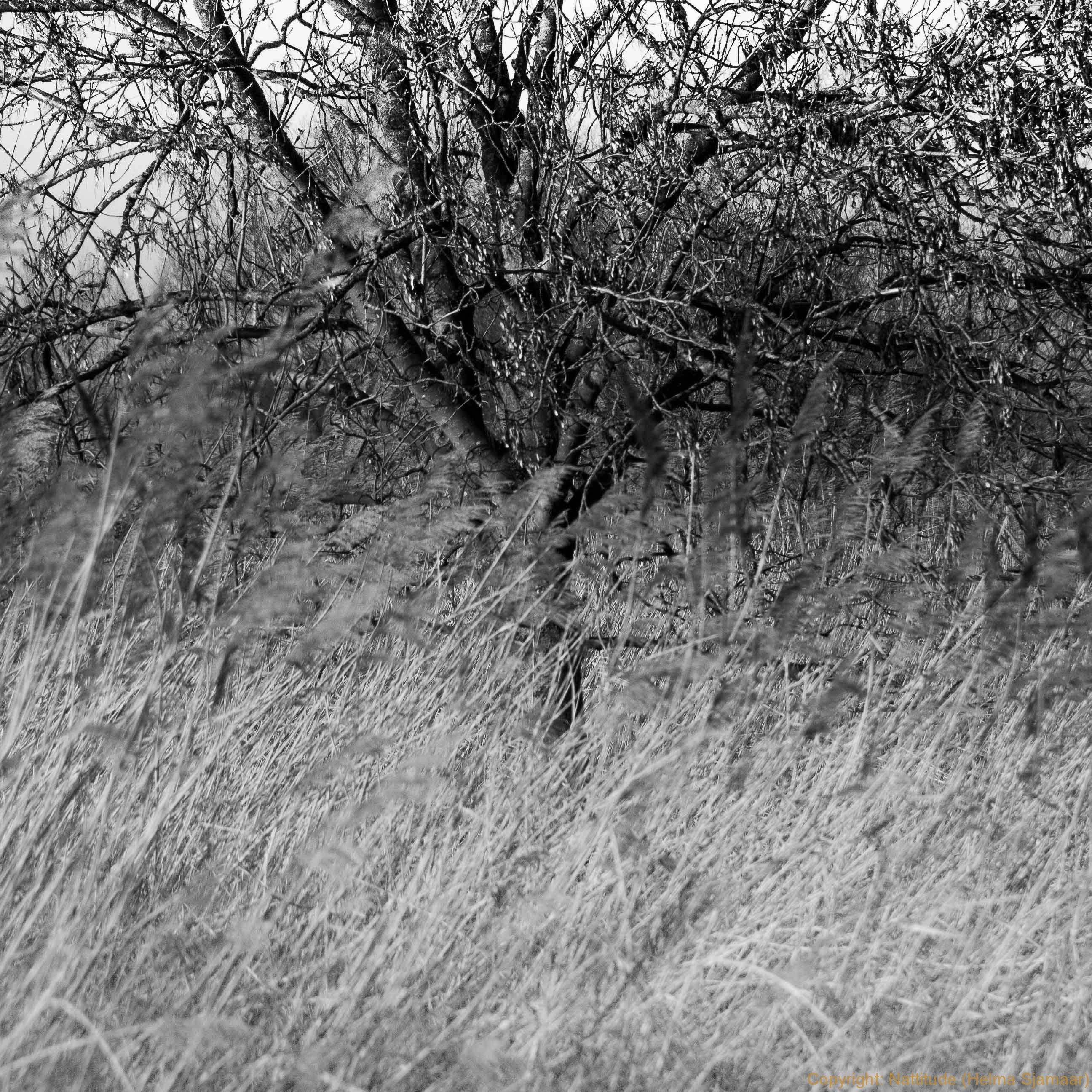 Verwilderde kersengaard (1 van 1).jpg